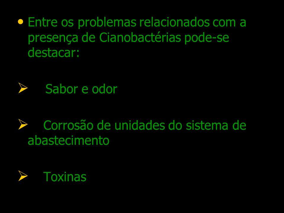 Entre os problemas relacionados com a presença de Cianobactérias pode-se destacar: