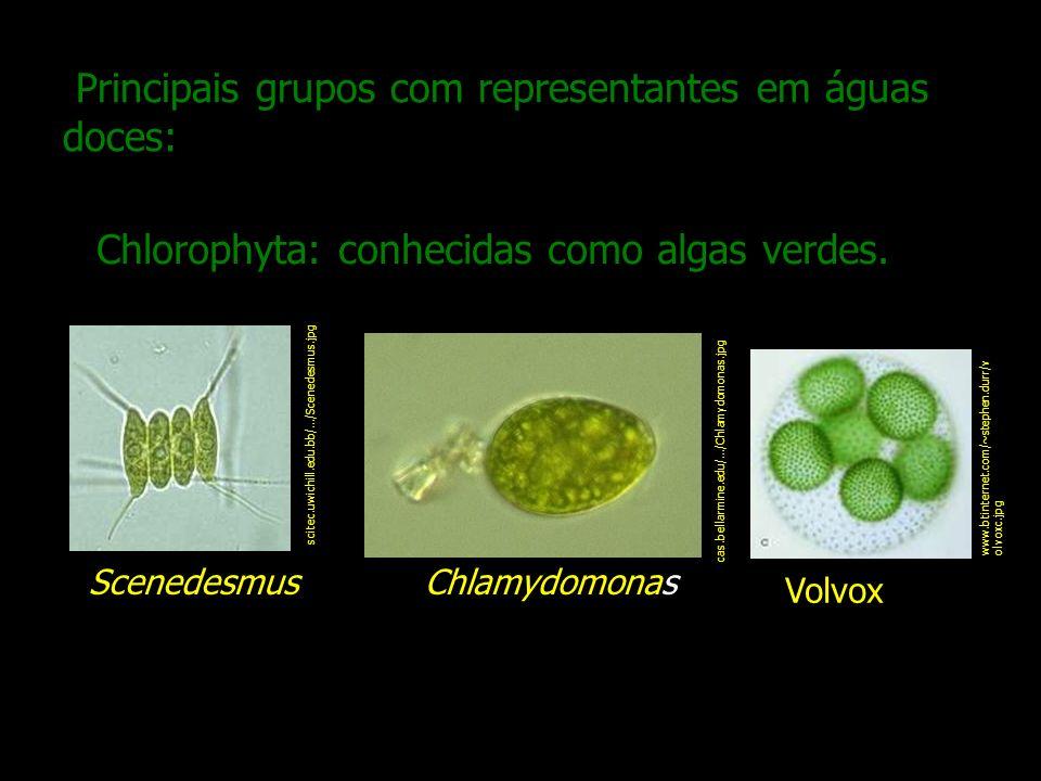 Principais grupos com representantes em águas doces: