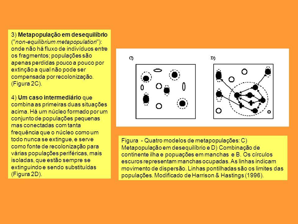 3) Metapopulação em desequilíbrio ( non-equilibrium metapopulation ): onde não há fluxo de indivíduos entre os fragmentos; populações são apenas perdidas pouco a pouco por extinção a qual não pode ser compensada por recolonização. (Figura 2C).