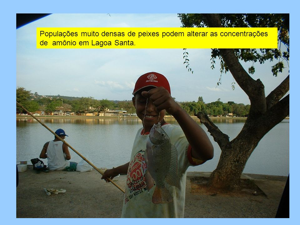 Populações muito densas de peixes podem alterar as concentrações de amônio em Lagoa Santa.