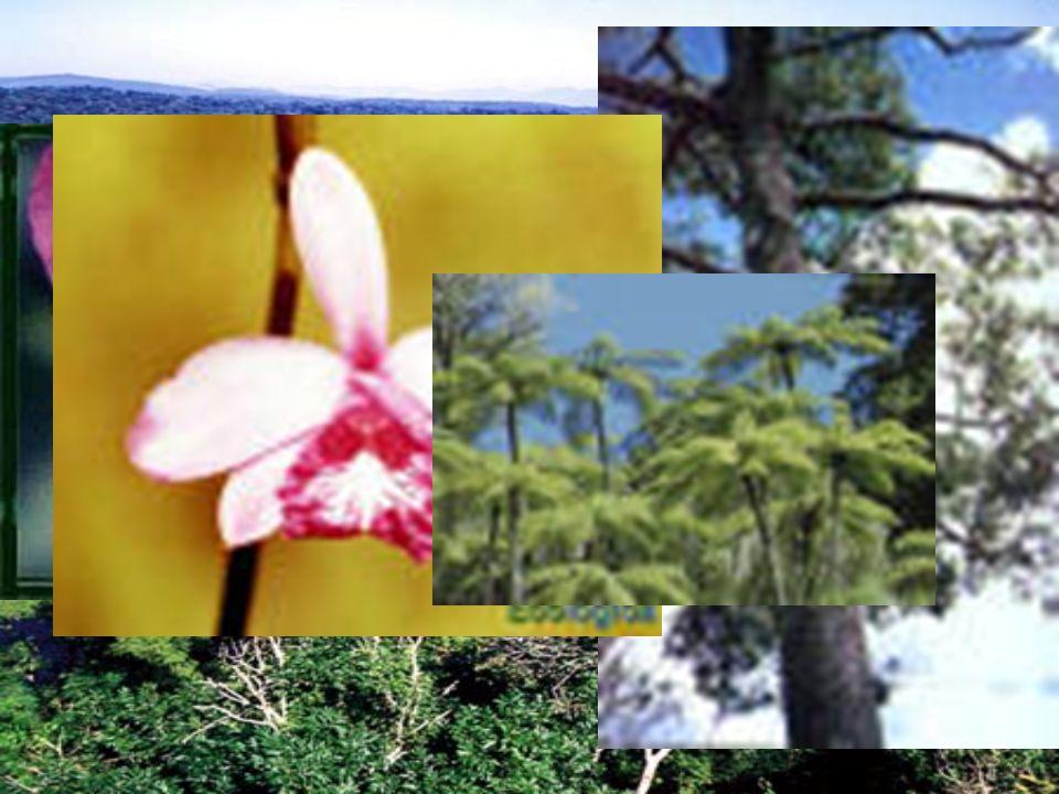 Jequitibá, palmito-doce, samambaioçus e outros - Floresta Estacional Semi-decidual – Mata Atlântica