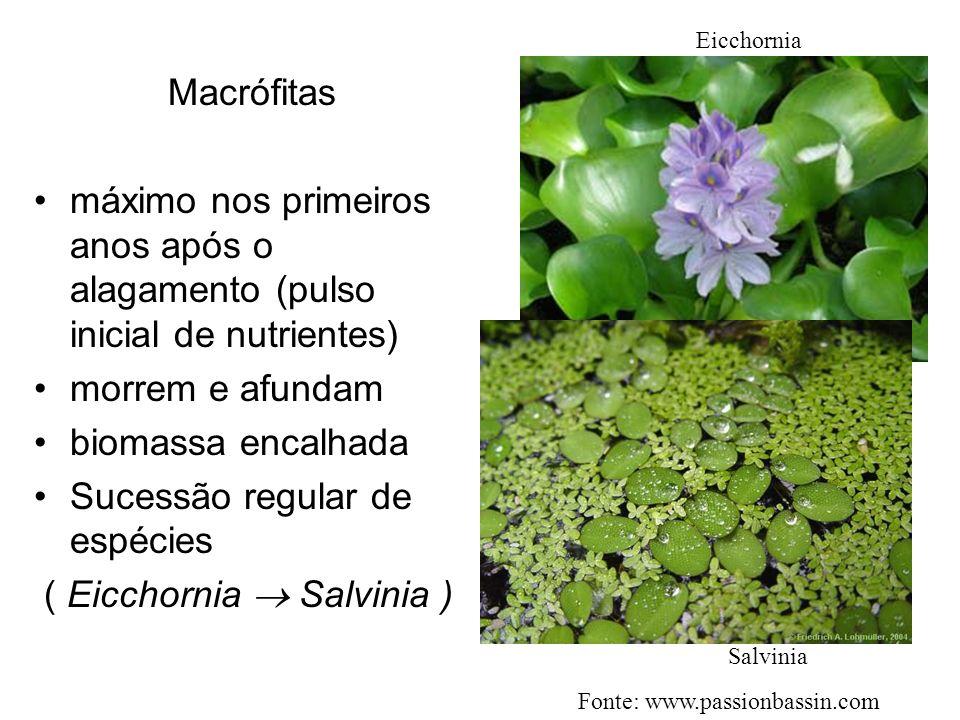 Sucessão regular de espécies ( Eicchornia  Salvinia )