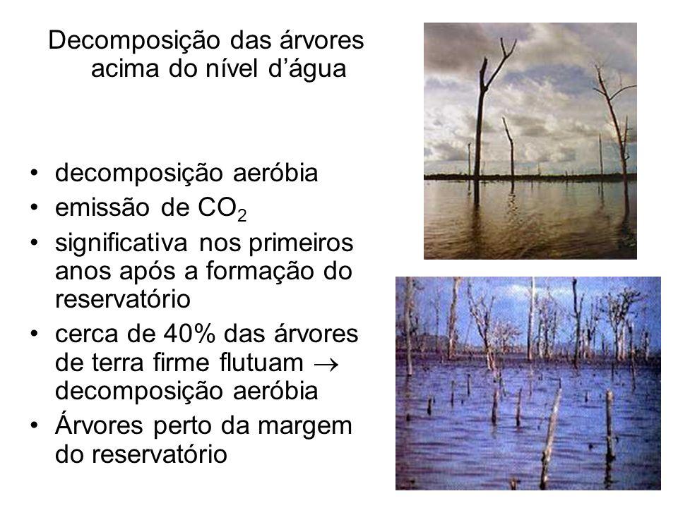 Decomposição das árvores acima do nível d'água