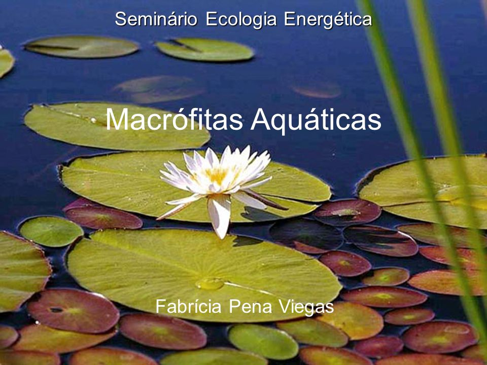 Seminário Ecologia Energética Macrófitas Aquáticas