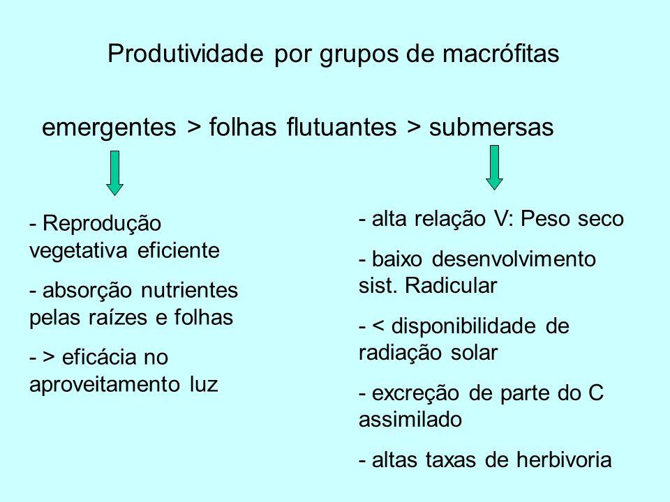 Produtividade por grupos de macrófitas