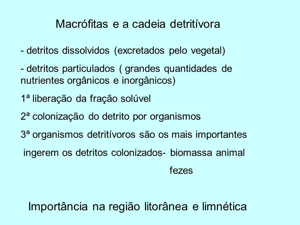 Macrófitas e a cadeia detritívora