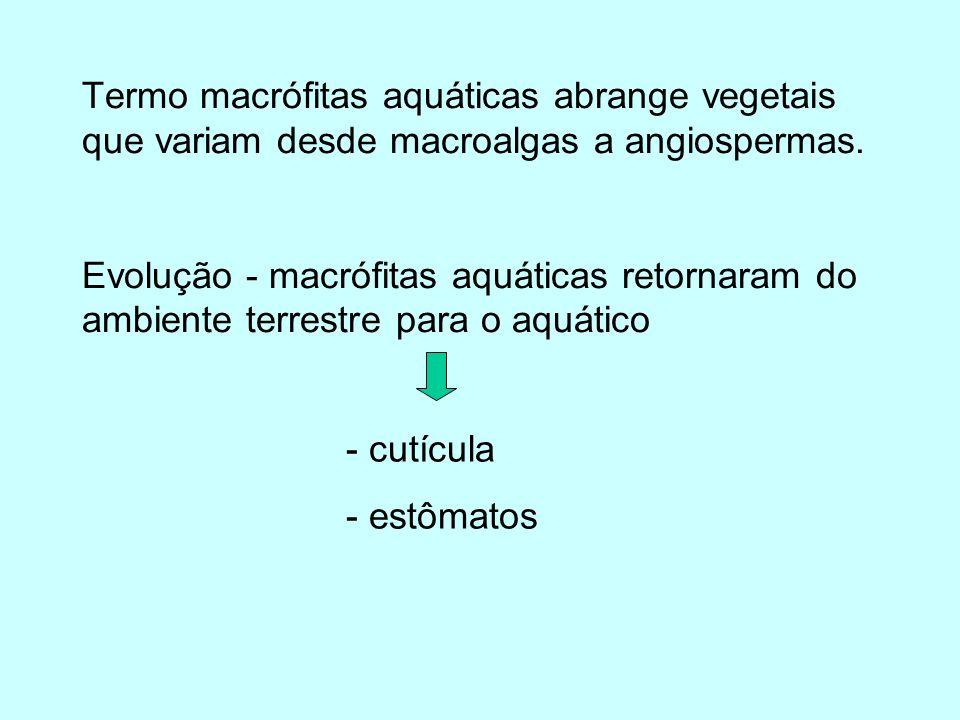 Termo macrófitas aquáticas abrange vegetais que variam desde macroalgas a angiospermas. Evolução - macrófitas aquáticas retornaram do ambiente terrestre para o aquático