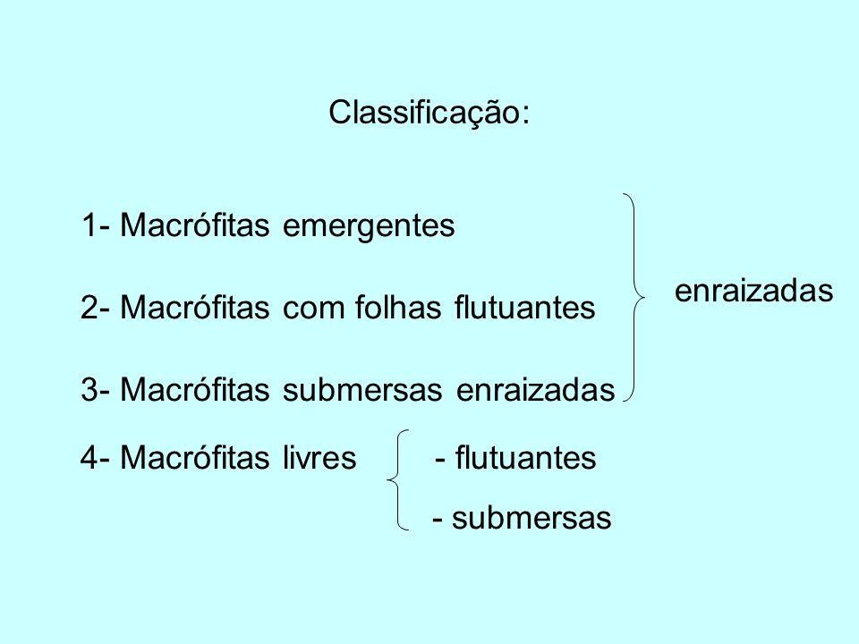 Classificação: 1- Macrófitas emergentes. 2- Macrófitas com folhas flutuantes. 3- Macrófitas submersas enraizadas.