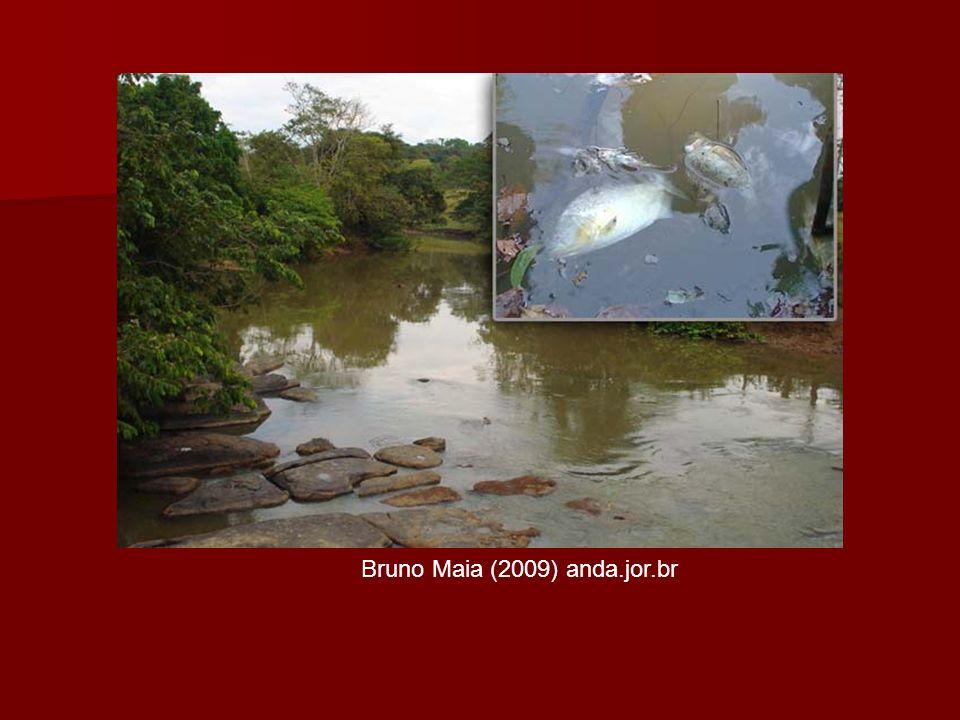 Bruno Maia (2009) anda.jor.br