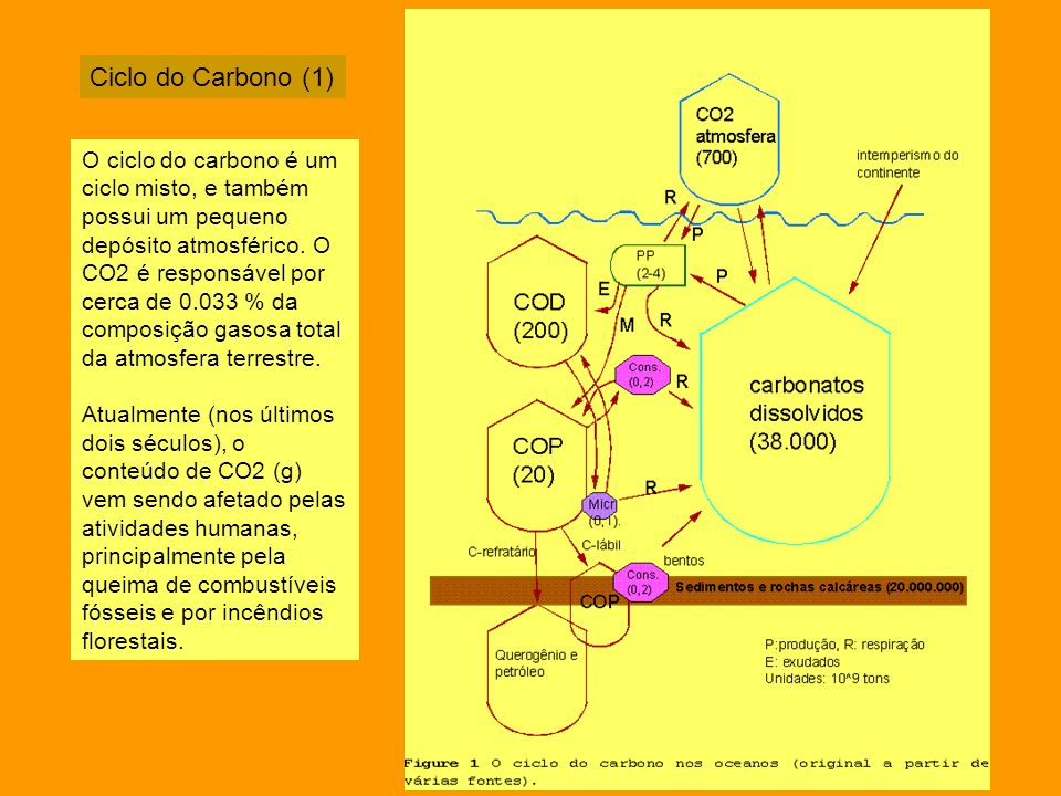 Ciclo do Carbono (1)