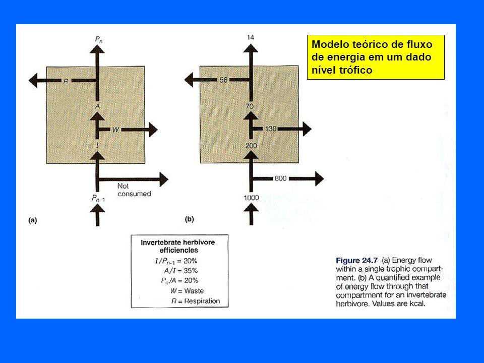 Modelo teórico de fluxo de energia em um dado nível trófico