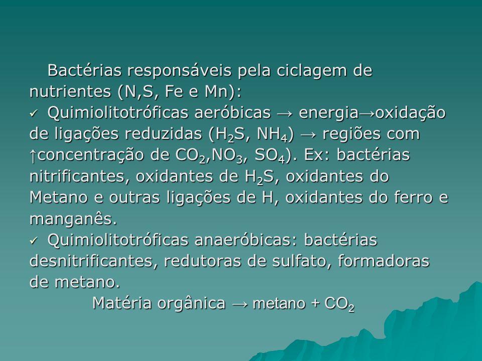 Bactérias responsáveis pela ciclagem de