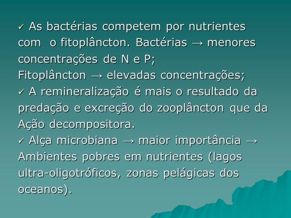 As bactérias competem por nutrientes