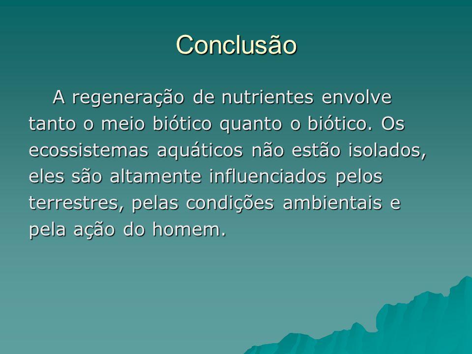 Conclusão A regeneração de nutrientes envolve