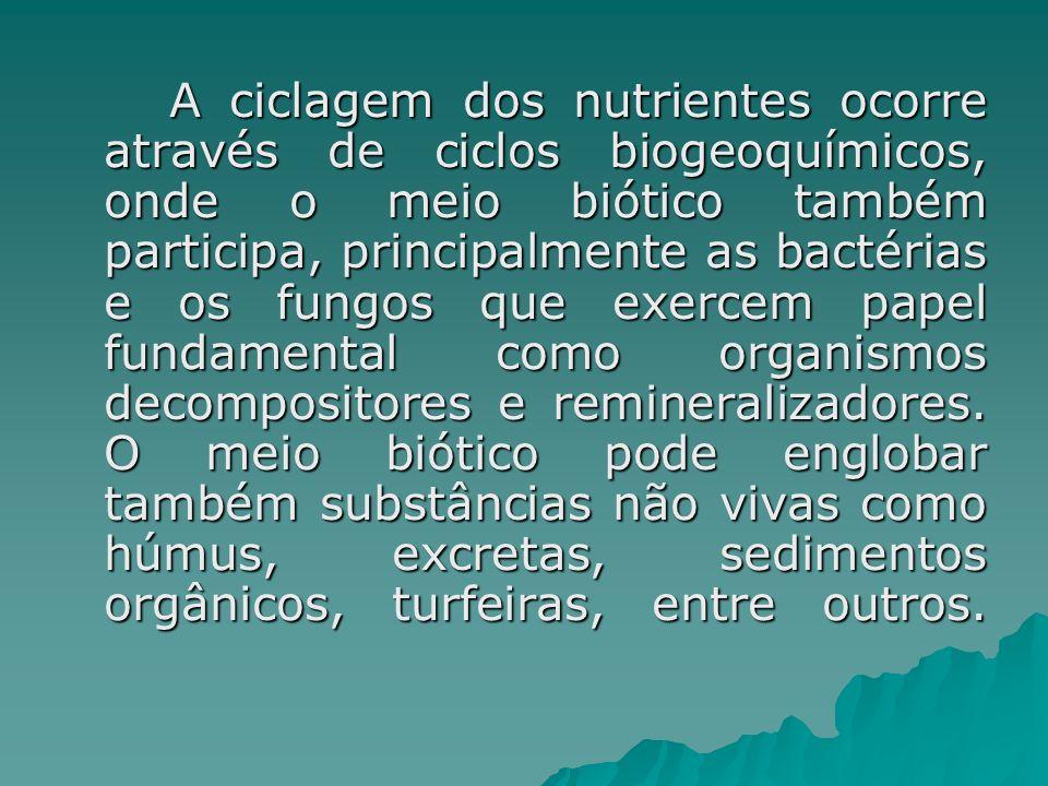 A ciclagem dos nutrientes ocorre através de ciclos biogeoquímicos, onde o meio biótico também participa, principalmente as bactérias e os fungos que exercem papel fundamental como organismos decompositores e remineralizadores.