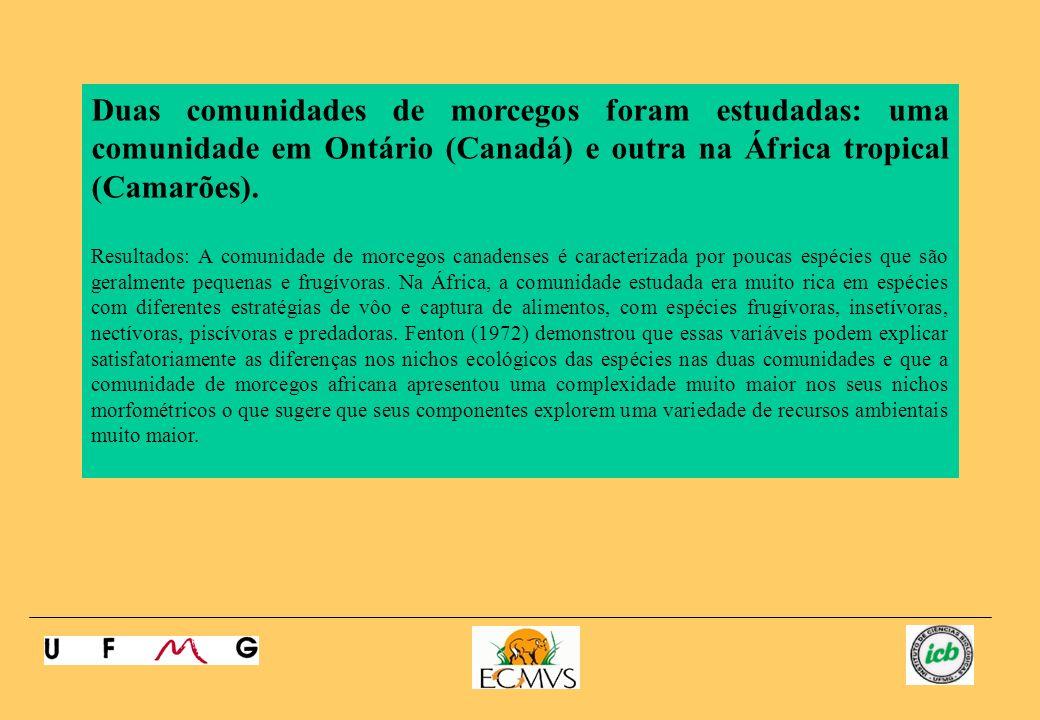 Duas comunidades de morcegos foram estudadas: uma comunidade em Ontário (Canadá) e outra na África tropical (Camarões).