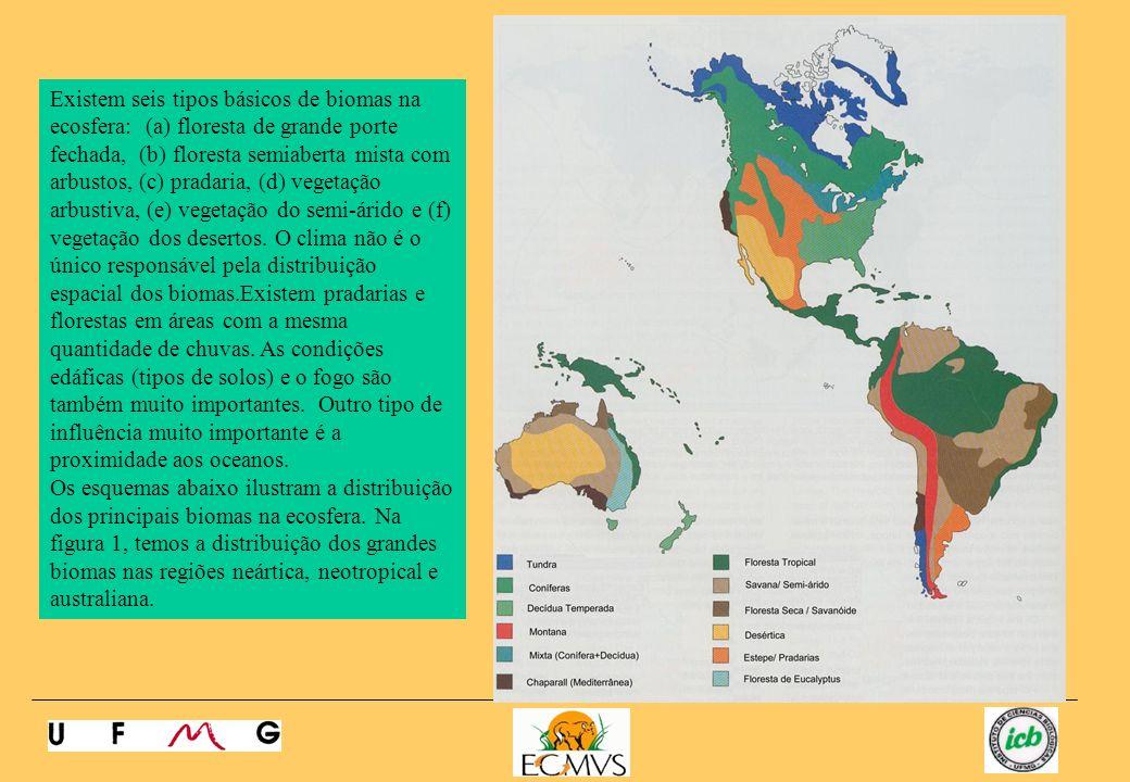 Existem seis tipos básicos de biomas na ecosfera: (a) floresta de grande porte fechada, (b) floresta semiaberta mista com arbustos, (c) pradaria, (d) vegetação arbustiva, (e) vegetação do semi-árido e (f) vegetação dos desertos. O clima não é o único responsável pela distribuição espacial dos biomas.Existem pradarias e florestas em áreas com a mesma quantidade de chuvas. As condições edáficas (tipos de solos) e o fogo são também muito importantes. Outro tipo de influência muito importante é a proximidade aos oceanos.