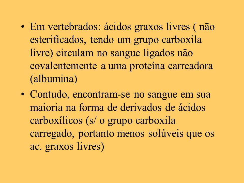 Em vertebrados: ácidos graxos livres ( não esterificados, tendo um grupo carboxila livre) circulam no sangue ligados não covalentemente a uma proteína carreadora (albumina)