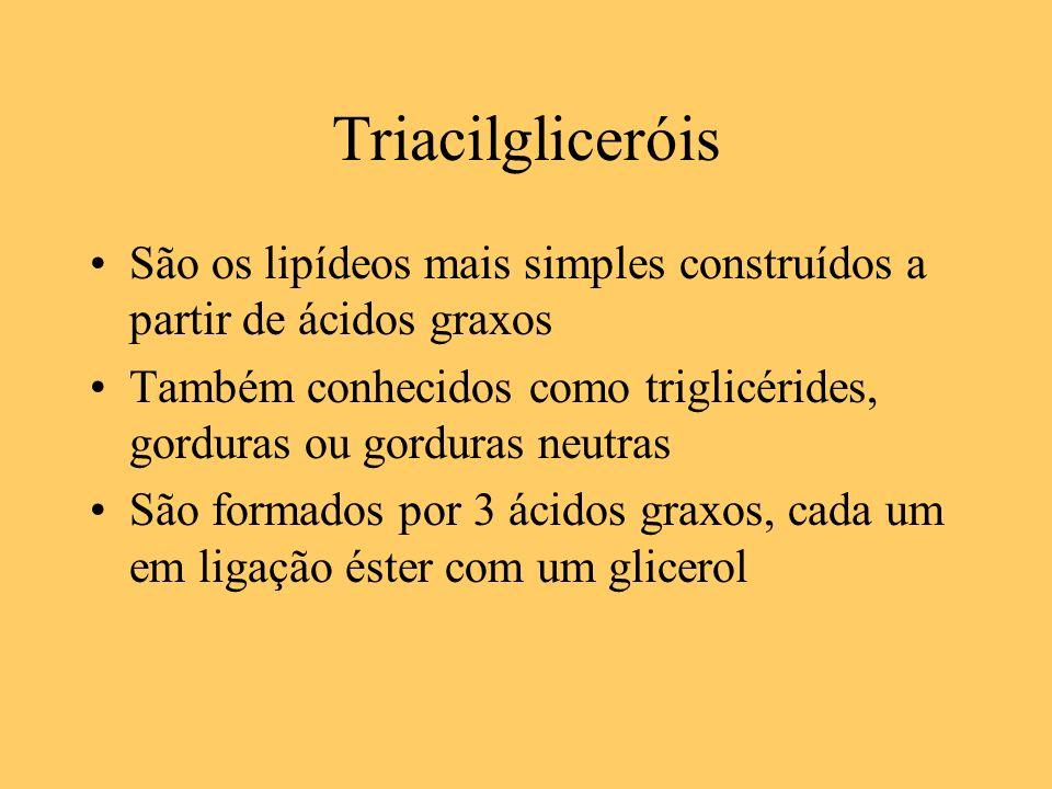 Triacilgliceróis São os lipídeos mais simples construídos a partir de ácidos graxos.