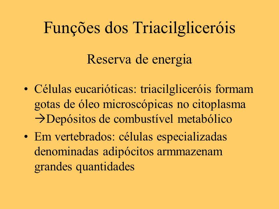 Funções dos Triacilgliceróis