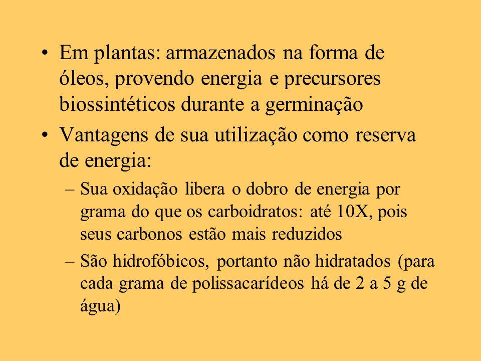 Vantagens de sua utilização como reserva de energia: