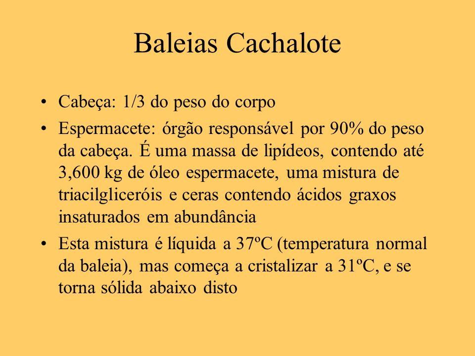 Baleias Cachalote Cabeça: 1/3 do peso do corpo