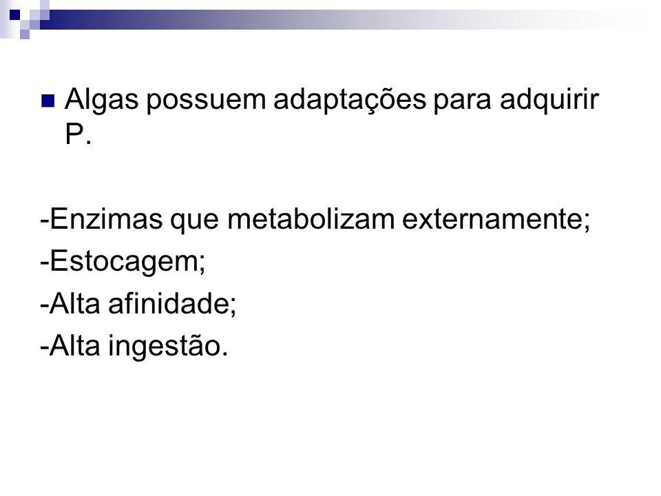 Algas possuem adaptações para adquirir P.