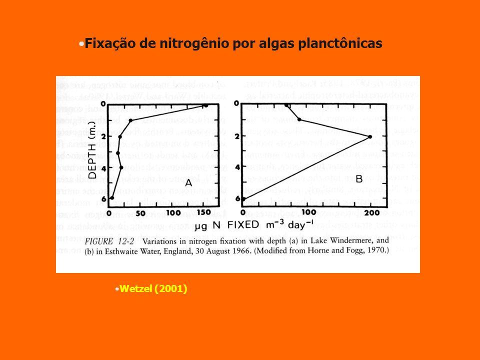 Fixação de nitrogênio por algas planctônicas