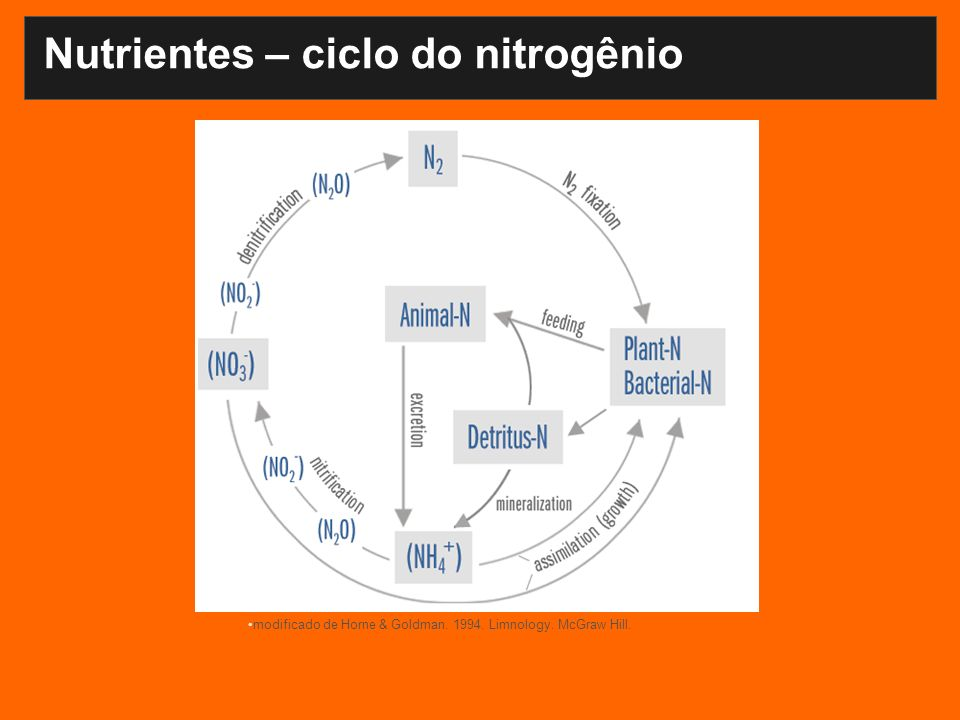 Nutrientes – ciclo do nitrogênio