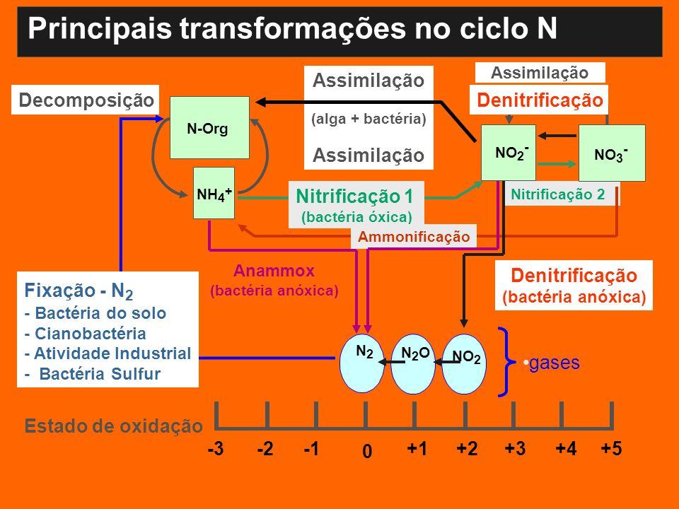 Principais transformações no ciclo N