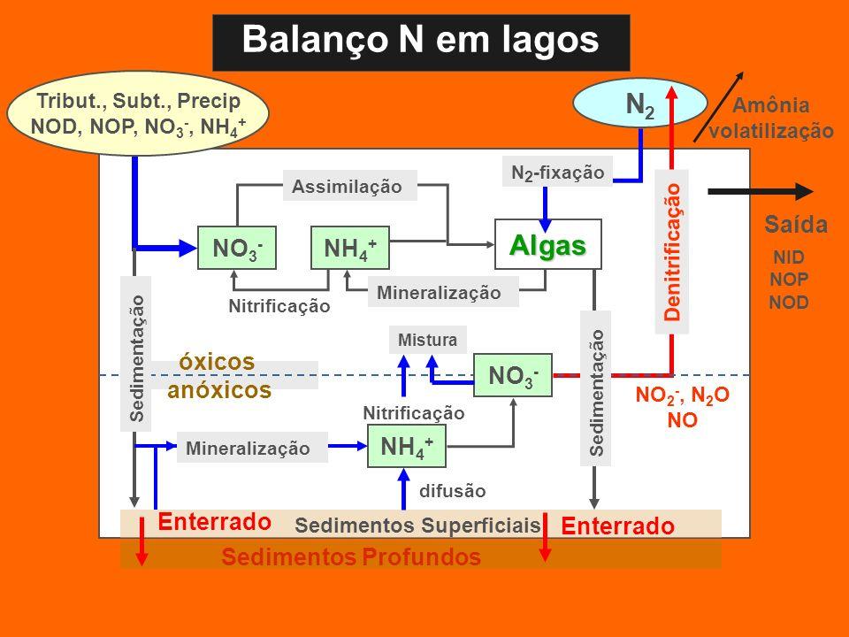 Balanço N em lagos N2 Algas Saída NO3- NH4+ NO3- óxicos anóxicos NH4+
