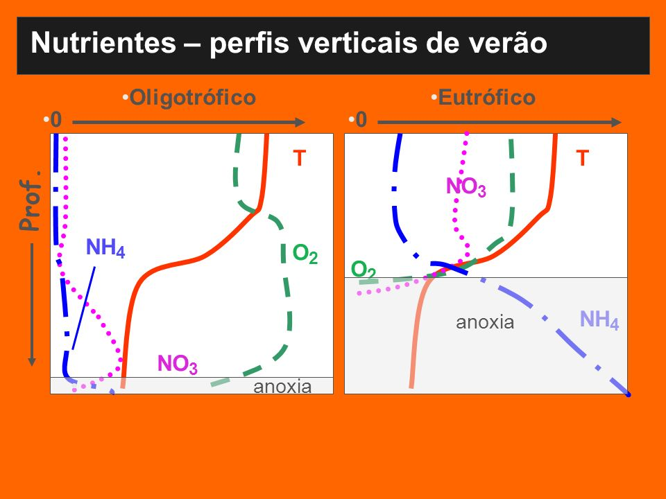 Nutrientes – perfis verticais de verão