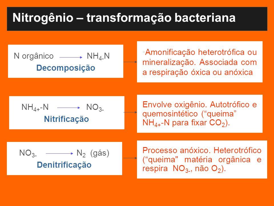 Nitrogênio – transformação bacteriana