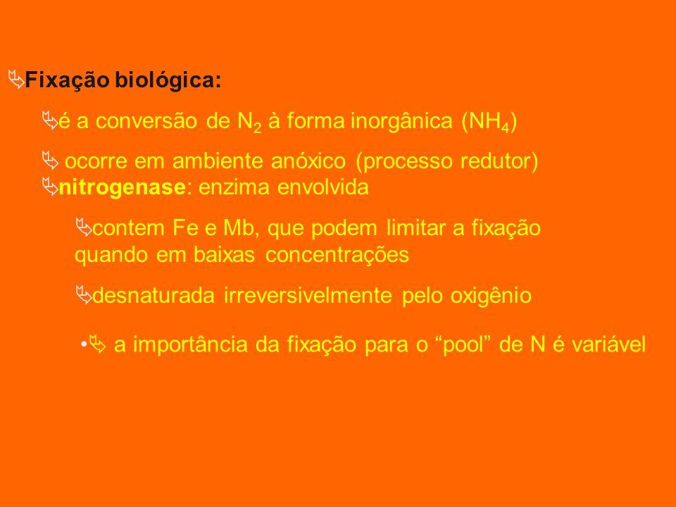 Fixação biológica: é a conversão de N2 à forma inorgânica (NH4) ocorre em ambiente anóxico (processo redutor)