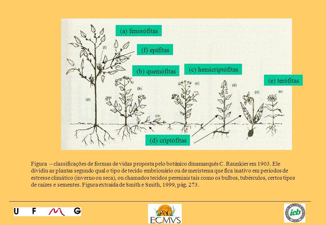 (a) fenorófitas (f) epífitas (c) hemicriptófitas (b) quemófitas