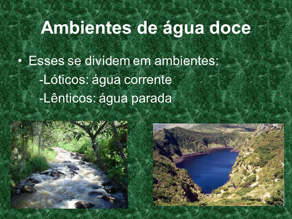 Ambientes de água doce Esses se dividem em ambientes: