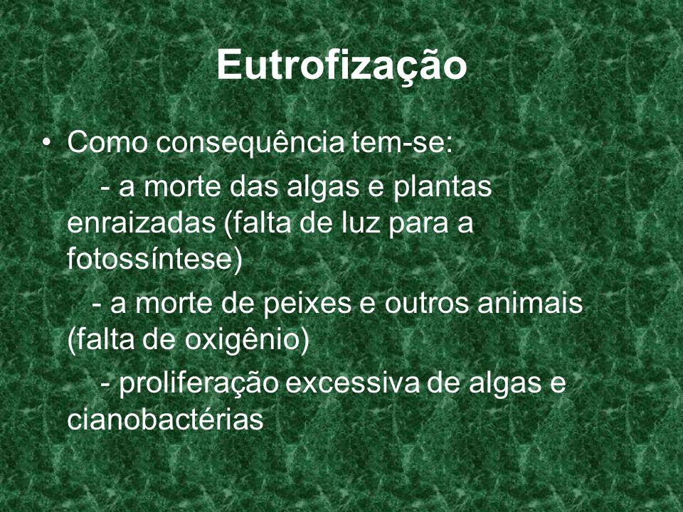 Eutrofização Como consequência tem-se:
