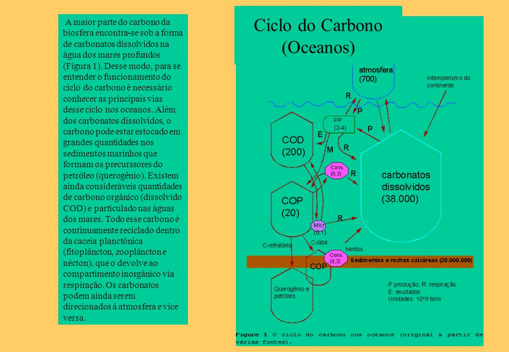 Ciclo do Carbono (Oceanos)