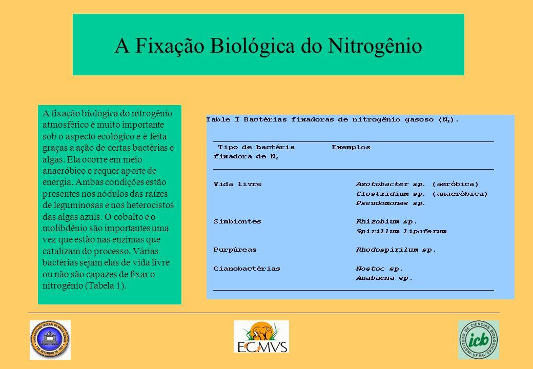 A Fixação Biológica do Nitrogênio
