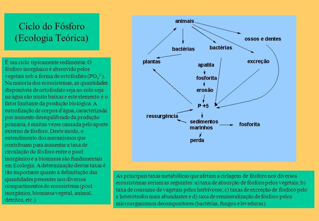 Ciclo do Fósforo (Ecologia Teórica)