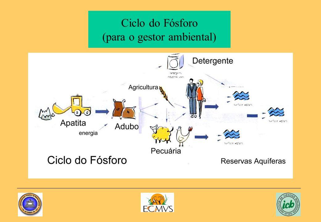 Ciclo do Fósforo (para o gestor ambiental)