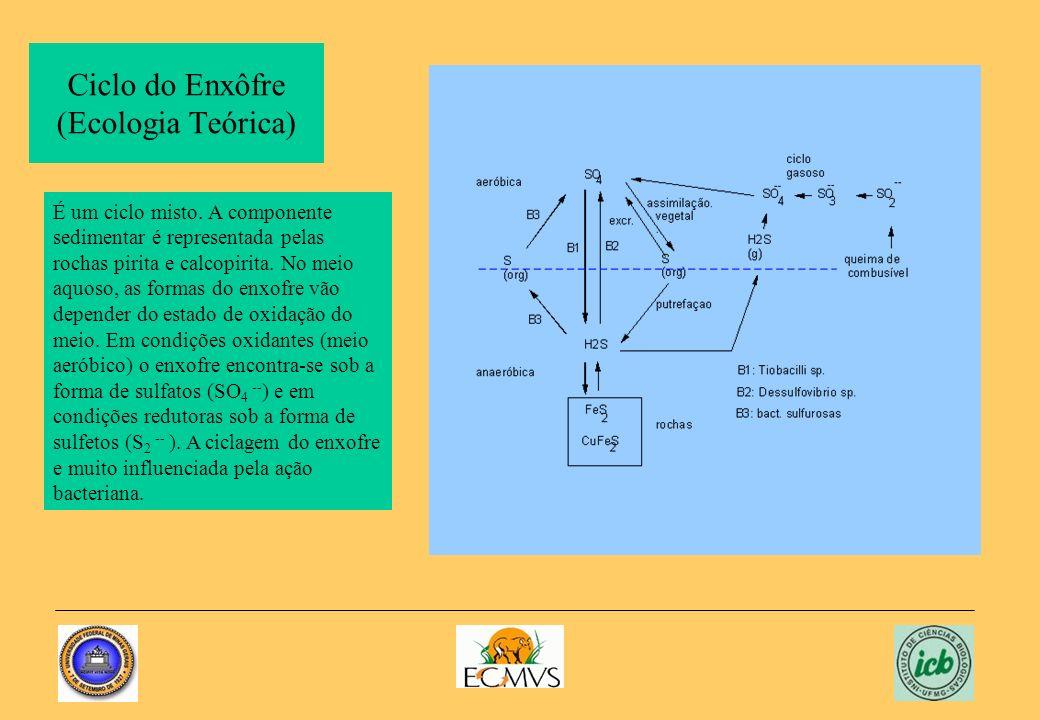 Ciclo do Enxôfre (Ecologia Teórica)
