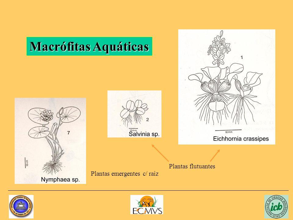 Macrófitas Aquáticas Plantas flutuantes Plantas emergentes c/ raiz