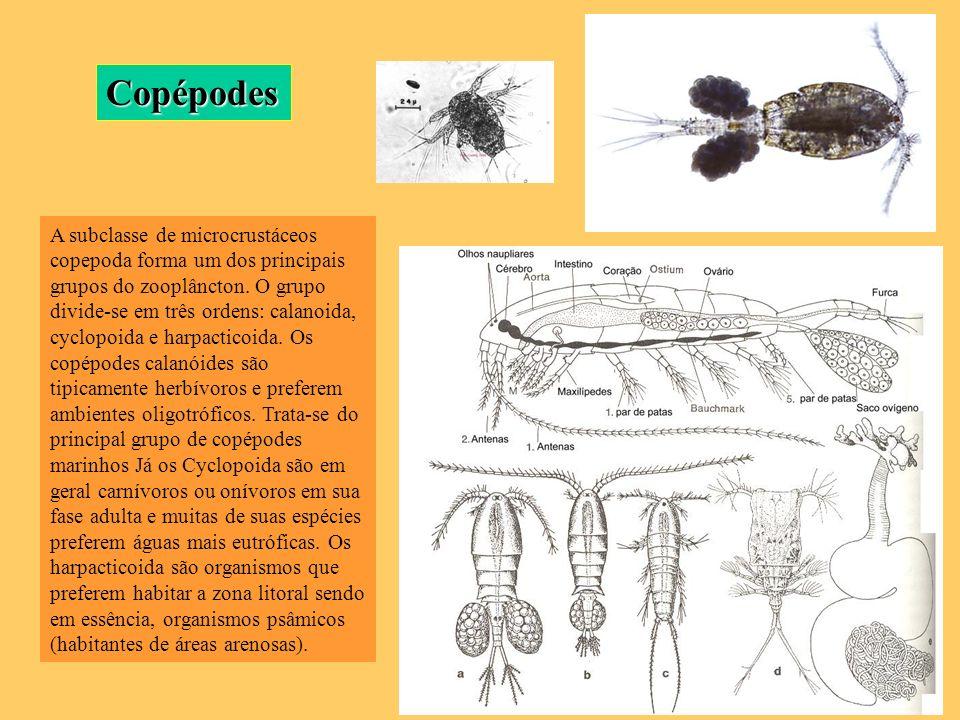 Copépodes