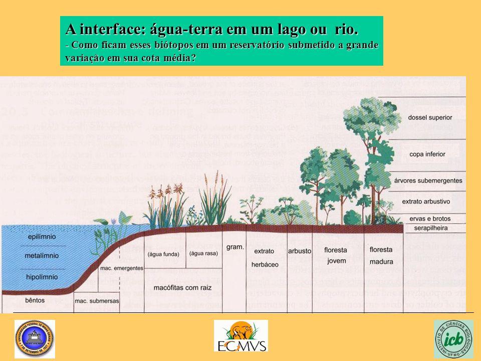 A interface: água-terra em um lago ou rio.
