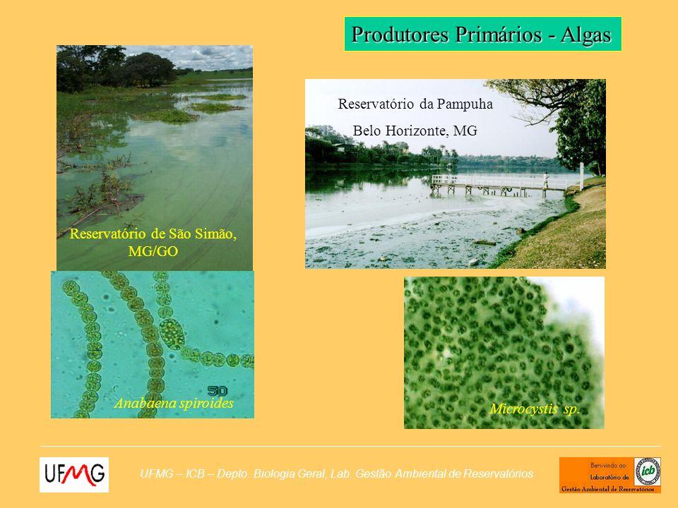 Produtores Primários - Algas