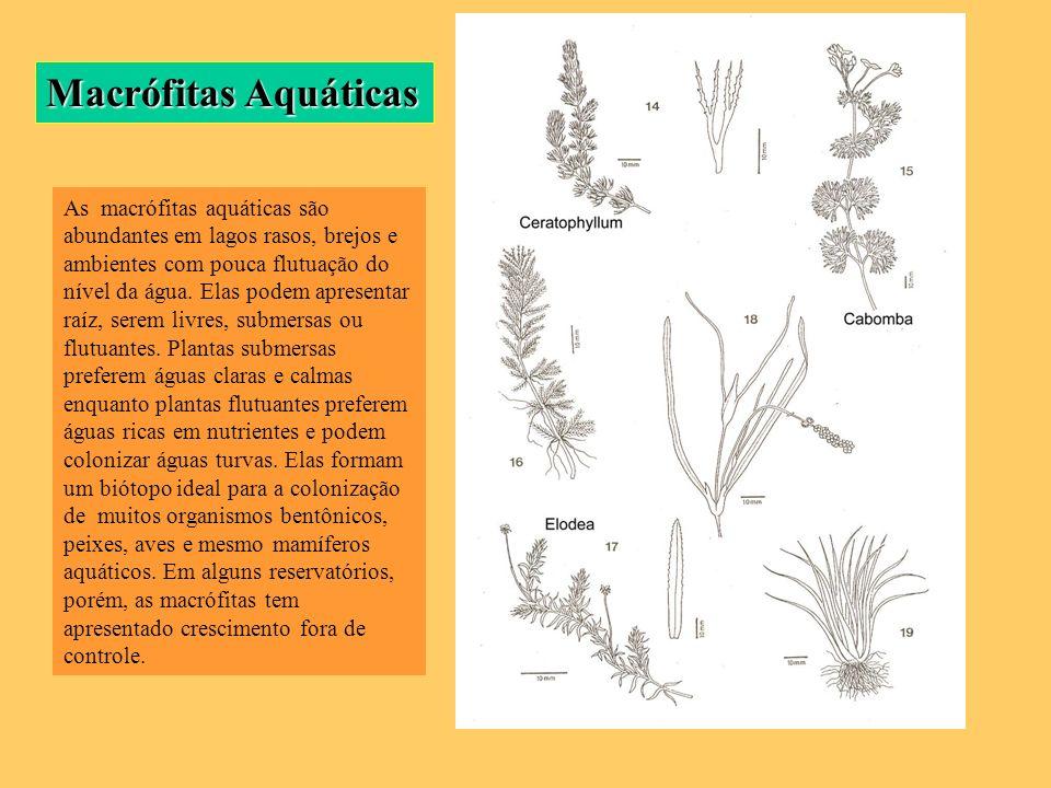 Macrófitas Aquáticas