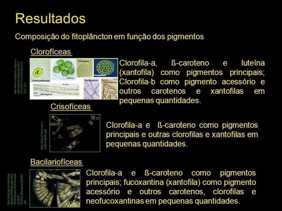Resultados Composição do fitoplâncton em função dos pigmentos