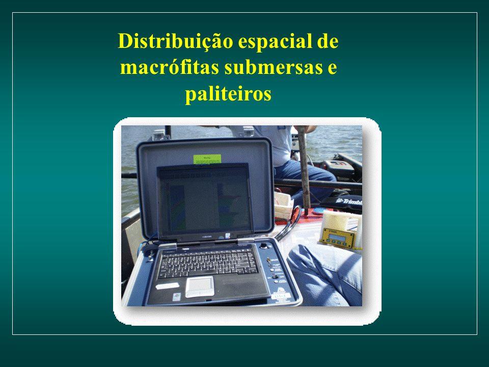 Distribuição espacial de macrófitas submersas e paliteiros