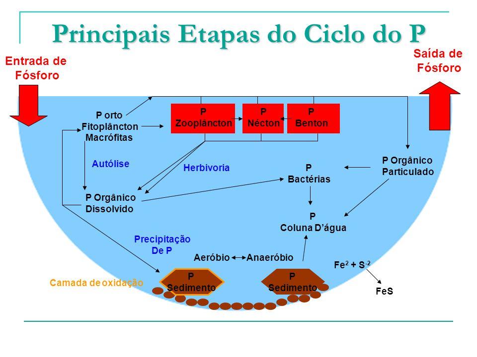 Principais Etapas do Ciclo do P